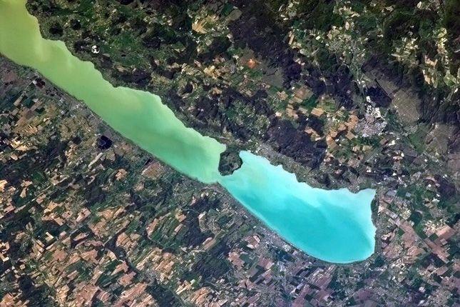 Algainvázió a Balatonban – Ettől zöldül most a tó vize