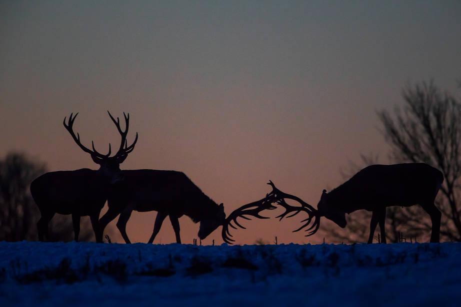 Második helyezést ért el a nagyvázsonyi fotós Az év természetfotósa országos pályázaton