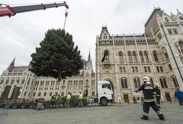 Veszprém adja idén az ország karácsonyfáját