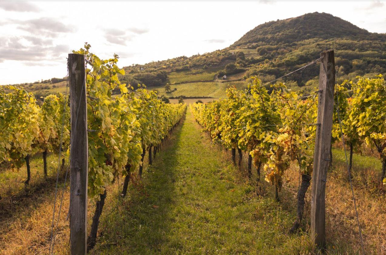 Késői szüret, kiváló borok az idei év mérlege