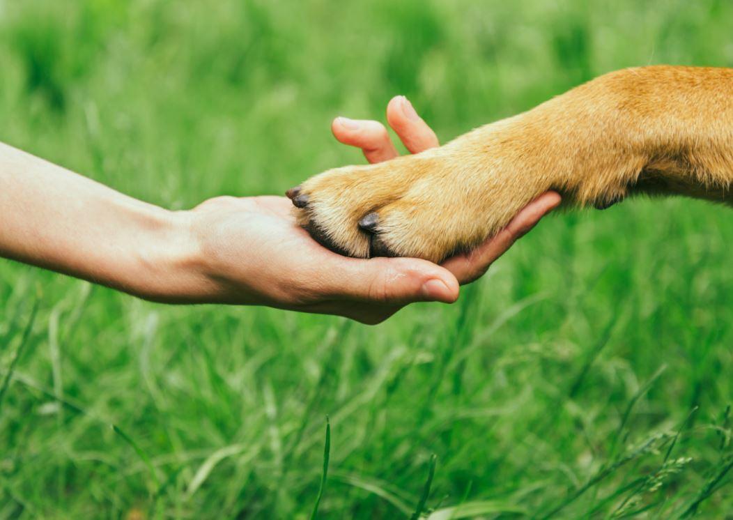 Állatvédelmi civil kezdeményezés indult Füreden