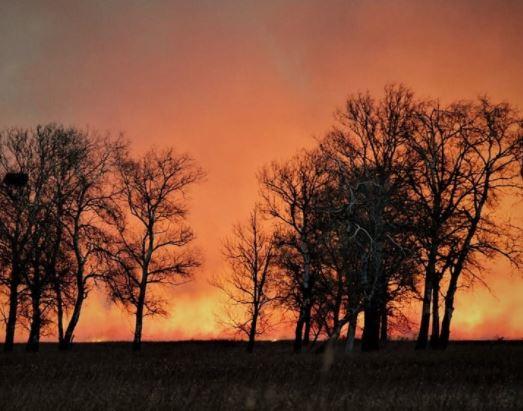 Lángokban a balatoni nádas és élővilága