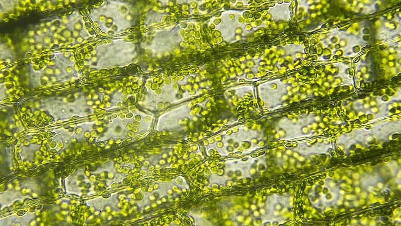 Közérthetően az algákról – online előadás a környezetvédelem jegyében