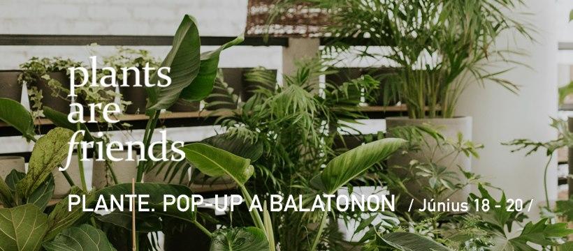 Pop-up dzsungel a Balatonon