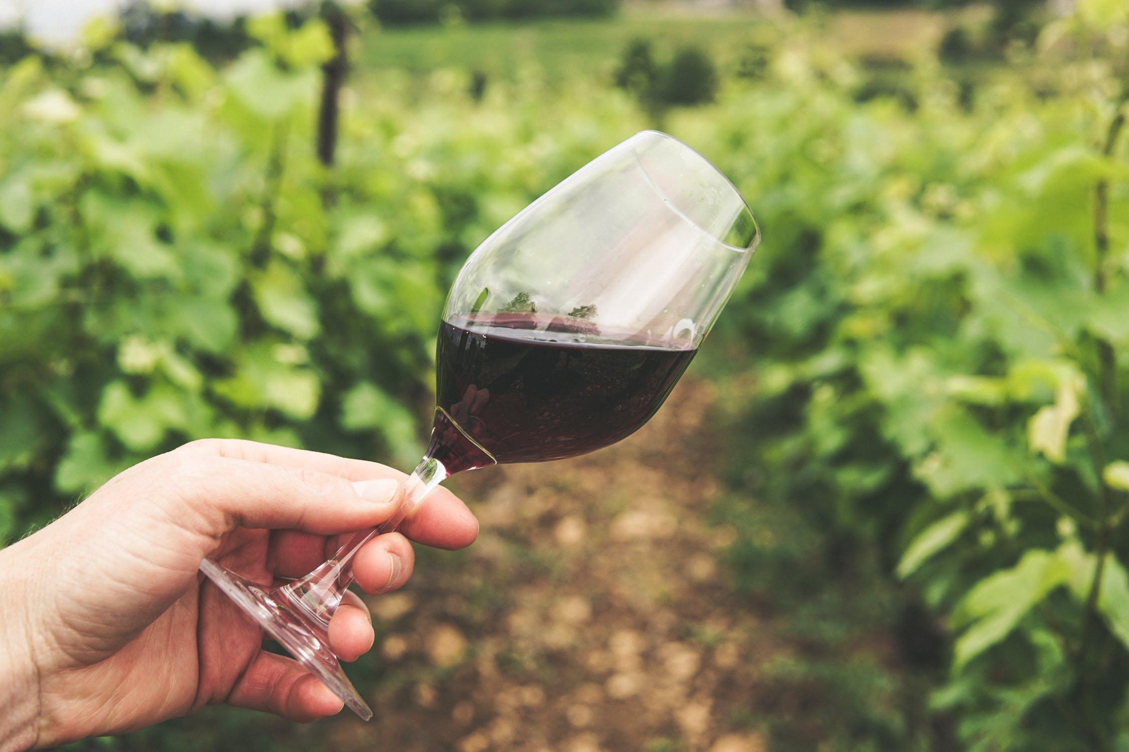 5+1 balatoni borászat, ahol már hangolódhatsz az őszre egy borkóstolóval