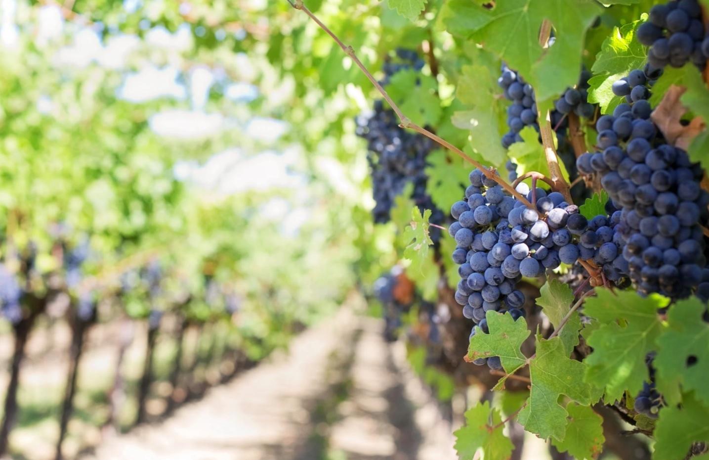 A borturizmus került a vendéglátás fókuszába